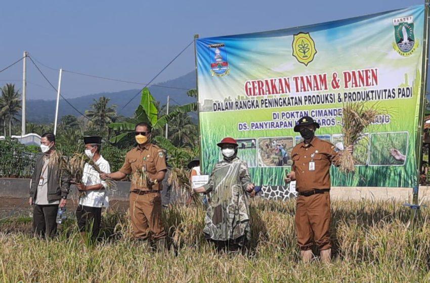 Perkuat Pertahanan Pangan, Banten Perluas 37 Hektar!